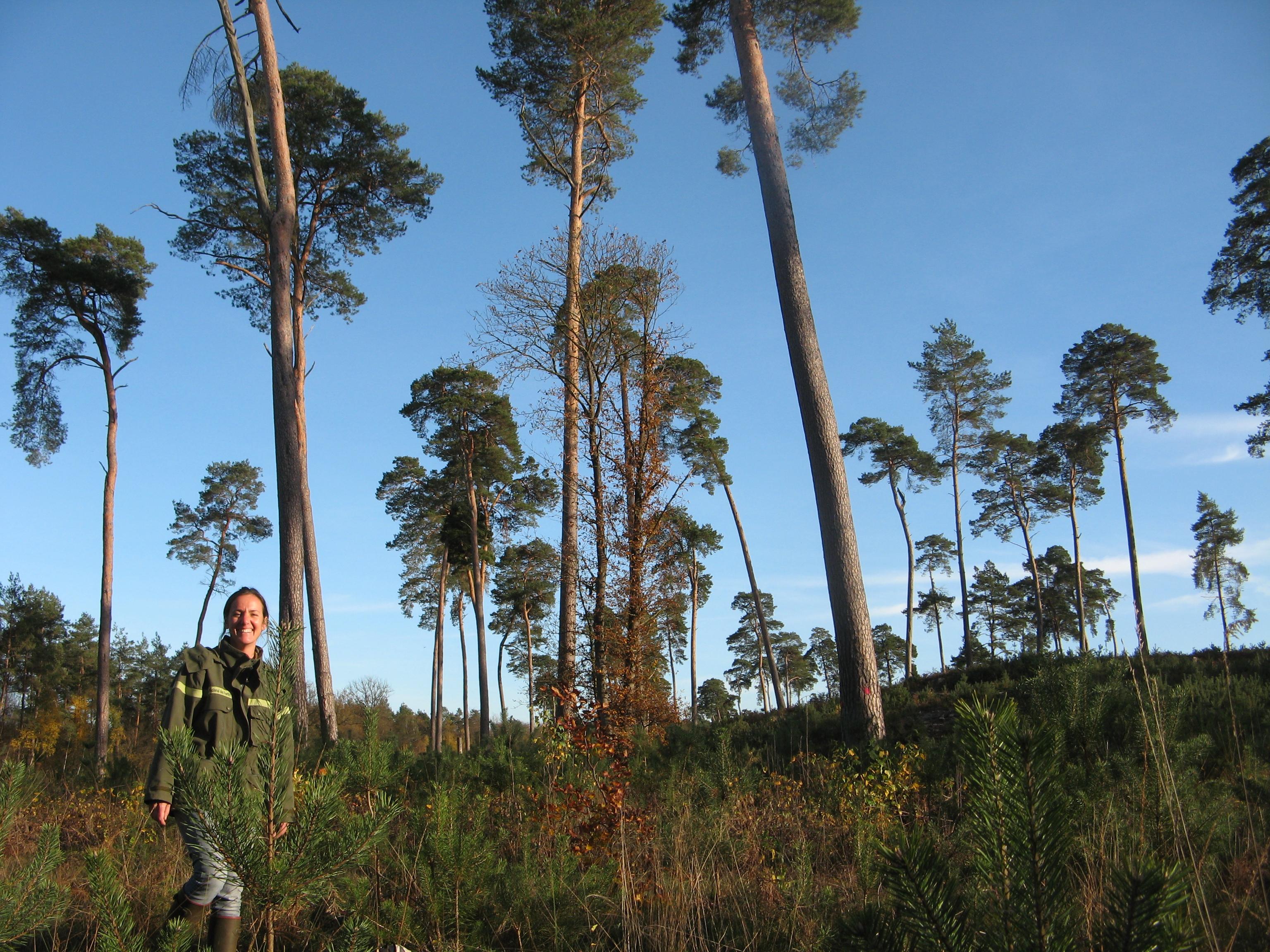 Laure Gautier, agent patrimonial de l'ONF, sur une parcelle de régénération. Forêt domaniale d'Ermenonville.