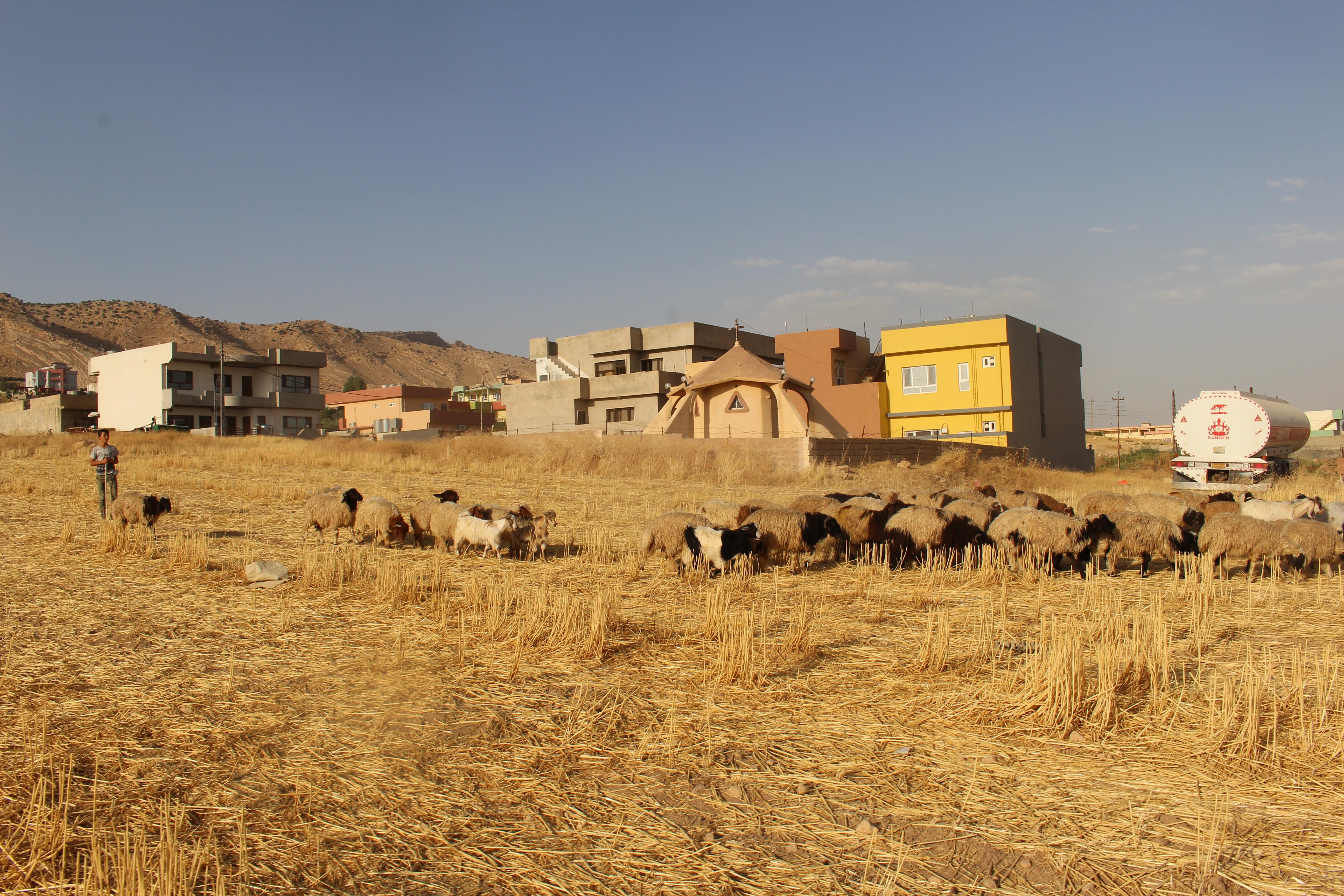 Champs de céréales à perte de vue devant le sanctuaire d'Alqosh. © Sylvain Dorient