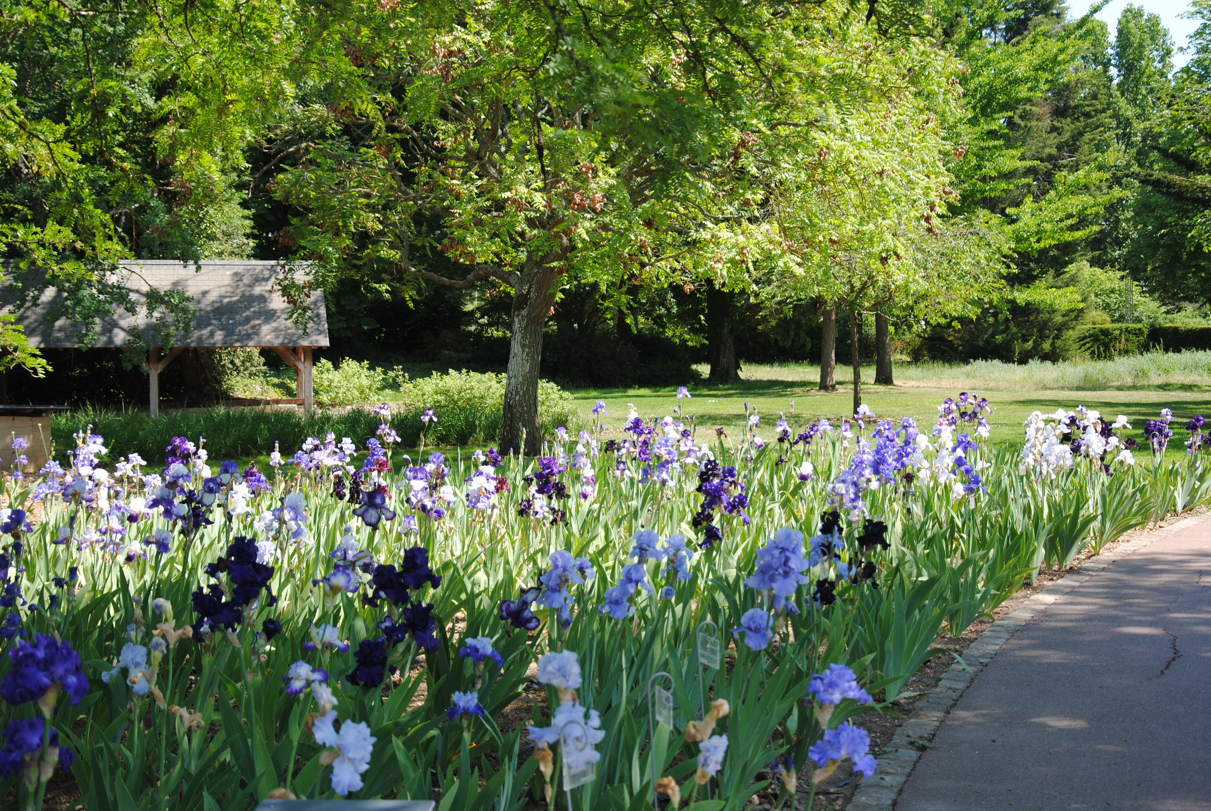 collection nationale d'iris germanica