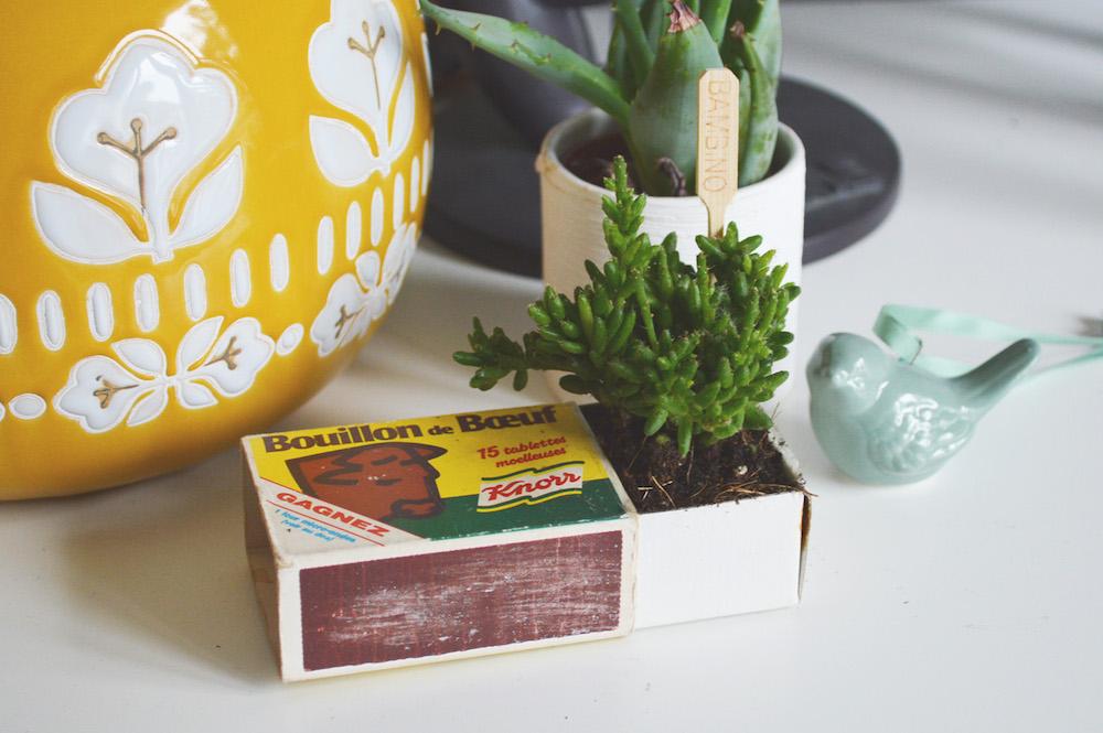 Planter une succulente dans une boîte d'allumette