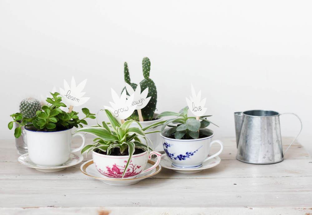 Transformer des tasses anciennes en mini jardinières