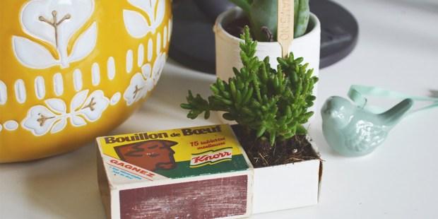 Les succulentes mises en boîte d'Aurélie