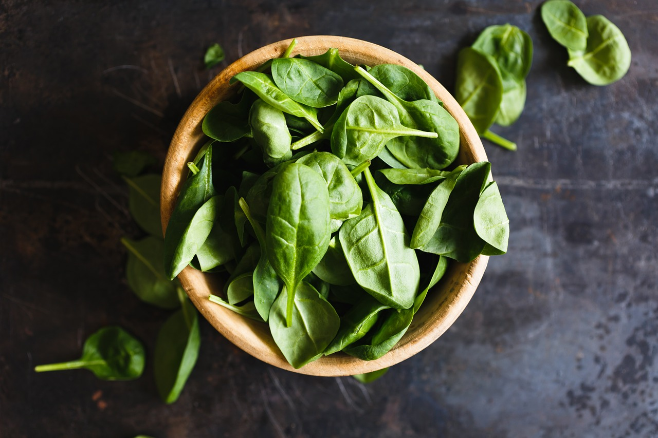 herbes aromatiques, pousses, basilic