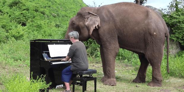 PIANO ELEPHANT