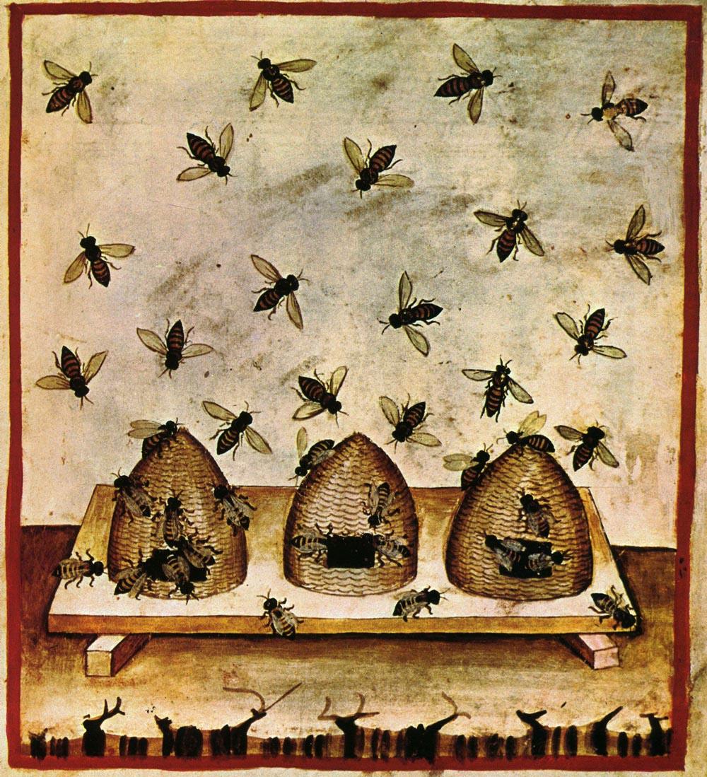 Ruches et abeilles