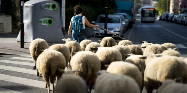 transhumance grand paris