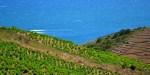 web2-vignes-vin-banyuls-flickr-17538282023_d12b353095_o.jpg