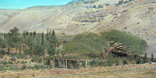 Qadesh Barnéa