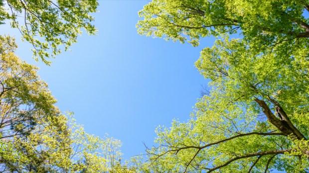 Arbres et ciel bleu
