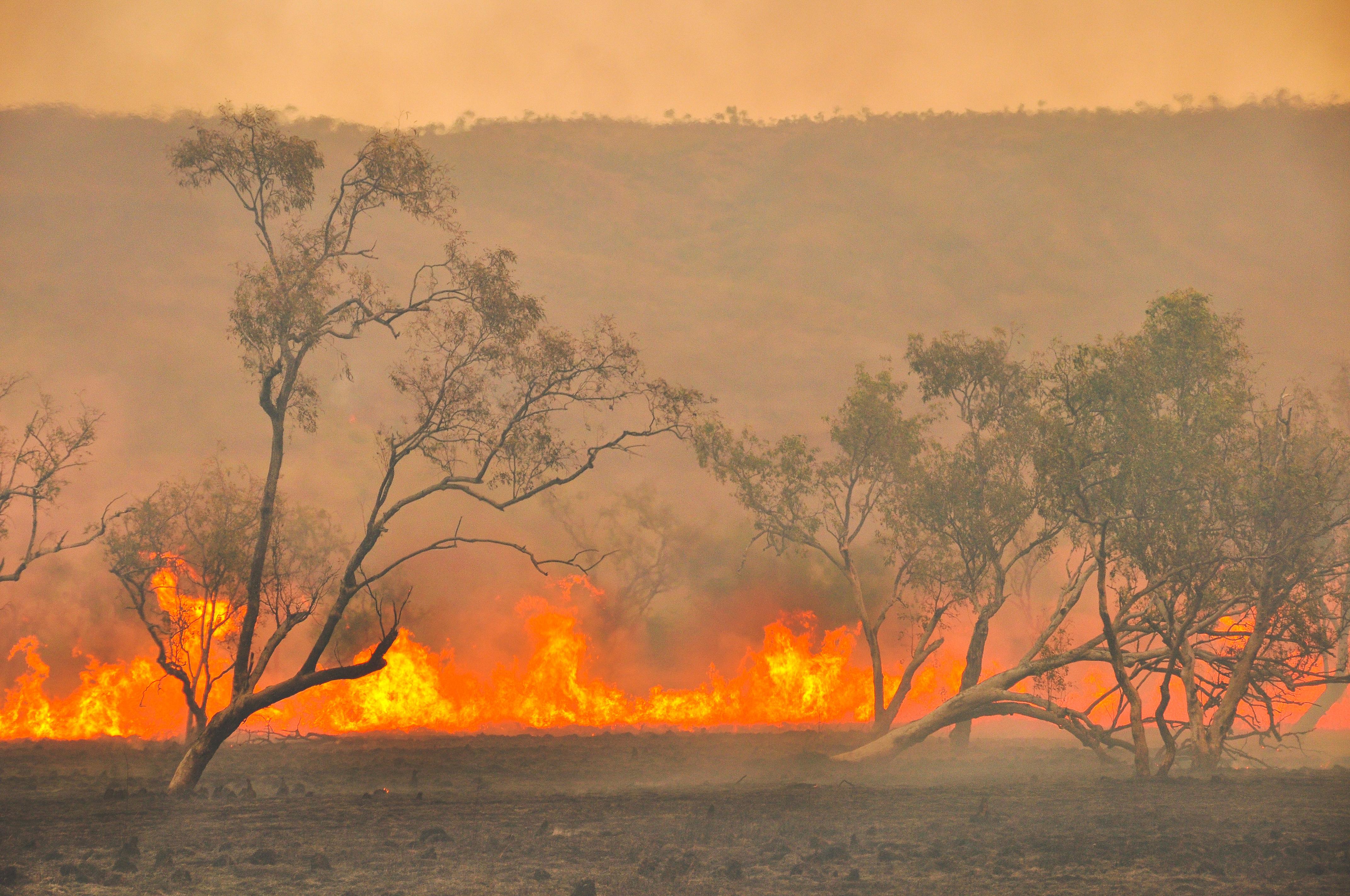 5,5 millions d'hectares sont partis en fumée en quatre mois.