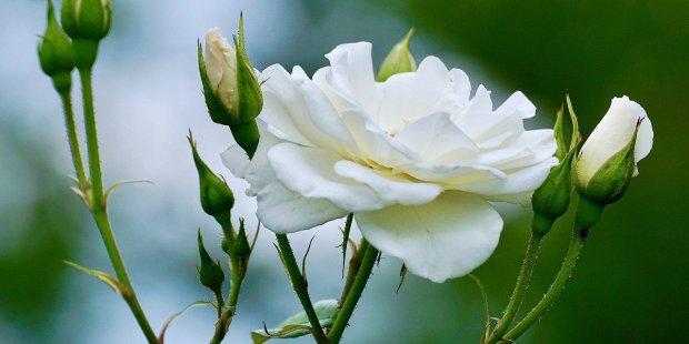 Mariage : les fleurs qu'il vous faut pour chaque saison