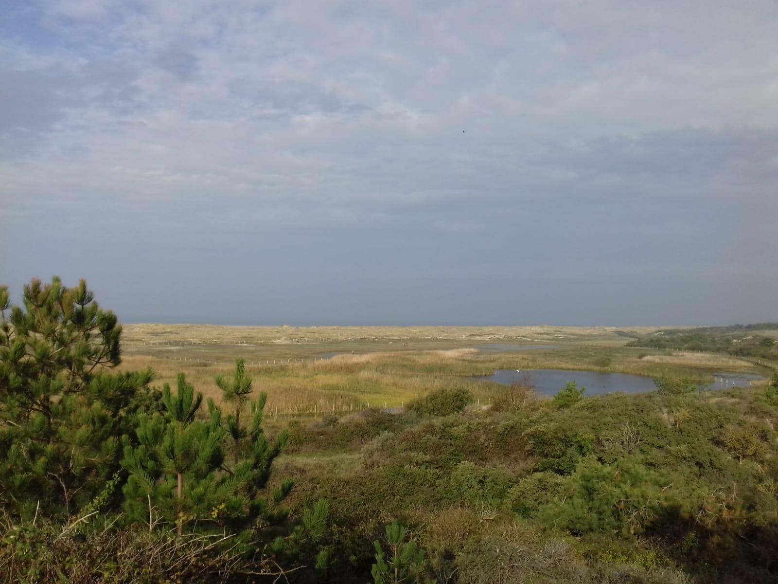 Parc ornithologique du Marquenterre.