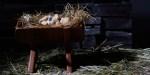 Jésus dans une mangeoire