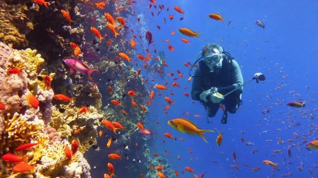Great_Barrier_Reef_-_shutterstock_593865266.jpg